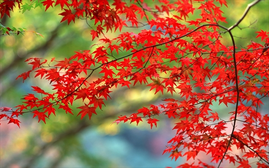 autumn-wallpapers41_R